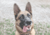 decisions-justice-commentees-19-Attention-chien-bruyant-170-120.png